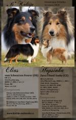 23.07.2020 Elias vom Schwarzen Feuer ist Vater geworden.