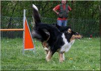 29.04.2010-agility-a
