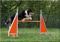 29.04.2010-agility-c