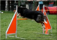 29.04.2010-agility-d