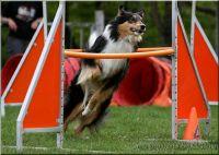 29.04.2010-agility-g