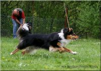 29.04.2010-agility-k