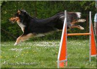 29.04.2010-agility-l