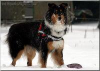 schnee-21-12-2009-1002