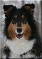 schnee-21-12-2009-1004
