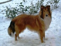 Clyde-Dezember-2009-1