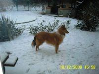 Clyde-Dezember-2009-2