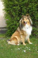 Comanche-April-2010-1