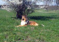 Comanche-April-2011-3